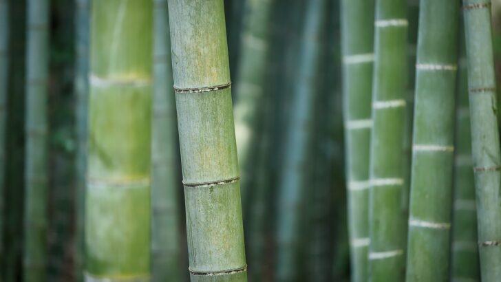 Bambou et environnement: est-il vraiment écologique?