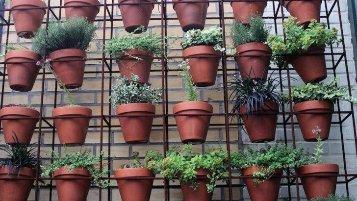Comment créer un mur végétal sur son balcon ?