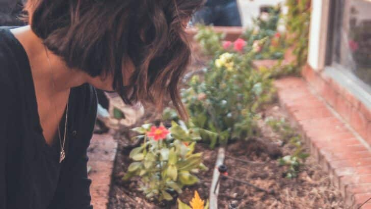Préparer son jardin pour l'été : que faire?